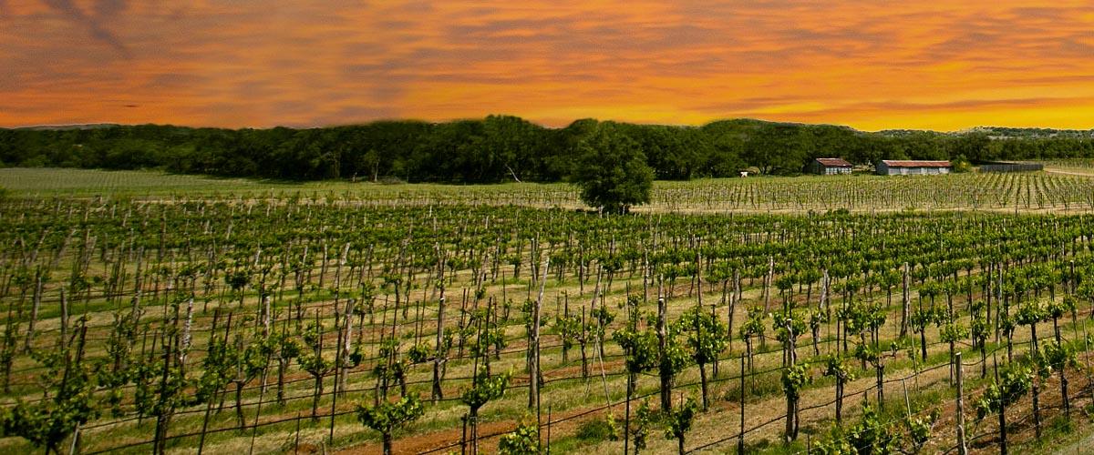 Spicewood Vineyards - Lake Travis Vineyard & Winery