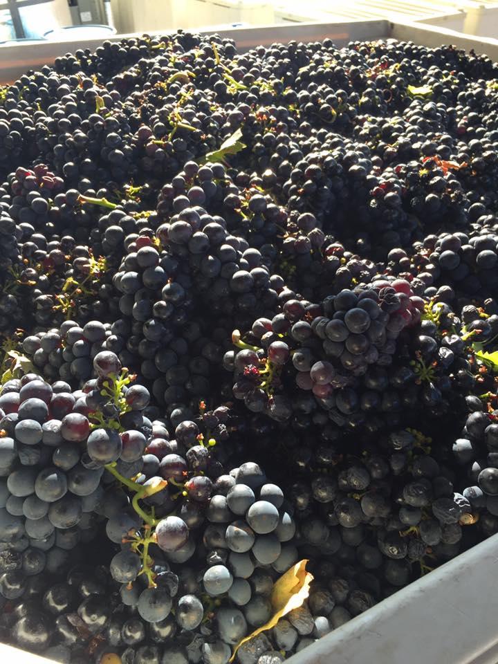 Bent Oak - Lake Travis Winery
