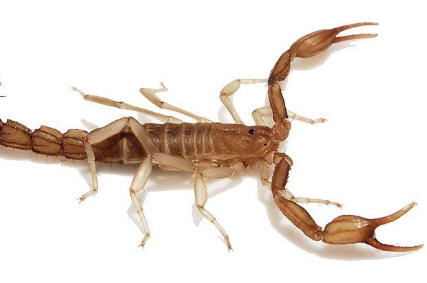 Lake Travis Pest Control