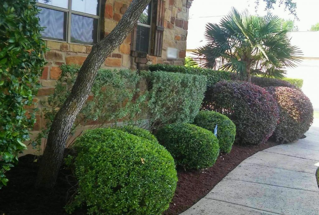 Top Choice Lawn Care