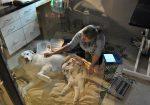 Lakeway Veterinary Clinic