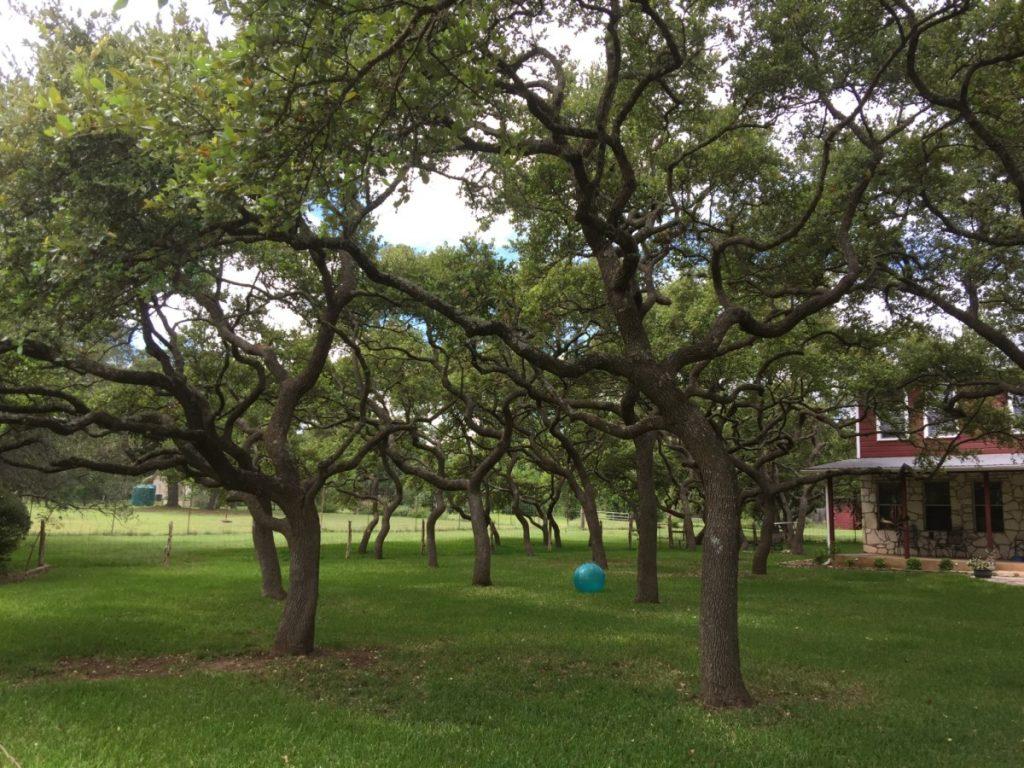 Lake Travis Tree Service - Austin Tree Surgeons