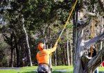 Good Guy Tree Service - Lake Travis Tree Trimming & Service