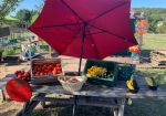 Farmer Dave's Farm Market