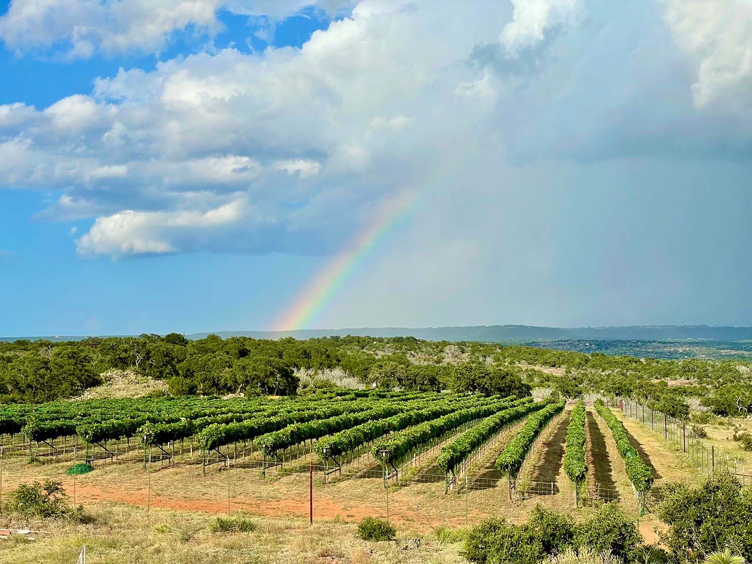 Torr Na Loch - Texas Hill Country Winery and Vineyard